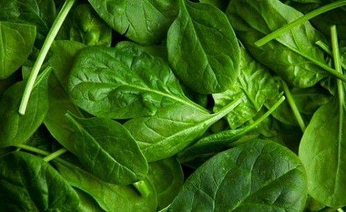 Фото - Як правильно вирощувати шпинат в городі?