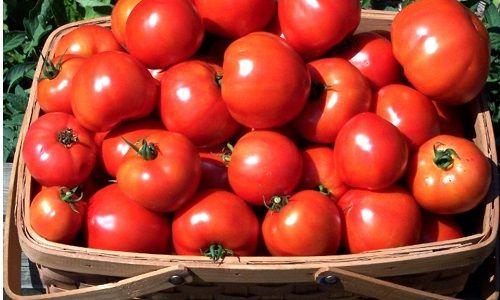 Фото - Як правильно виростити здорові помідори?