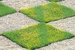 Фото - Як зробити газон своїми руками: трава без турбот