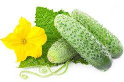 Корисна інформація для вирощування огірків