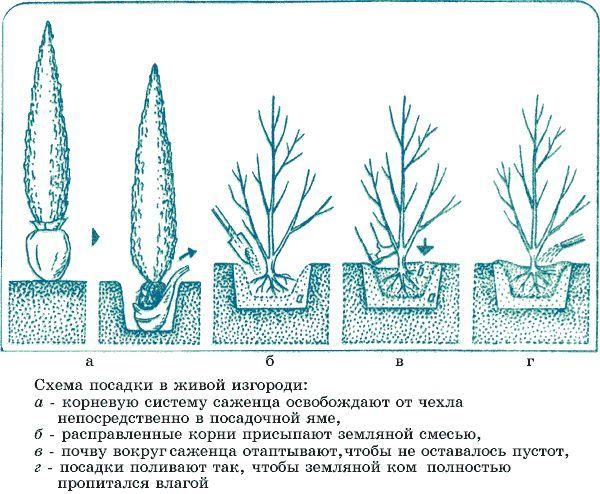 Фото - Як зробити необхідне для саду самостійно?