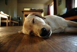 Фото - Як зробити теплим дерев'яна підлога без сучків і щілин?