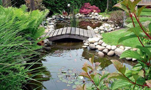 Як створити водоймище на своїй ділянці?