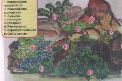 схема альпінарію
