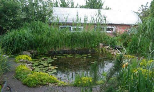 Фото - Як викопати і облаштувати ставок на дачній ділянці в сільському стилі?