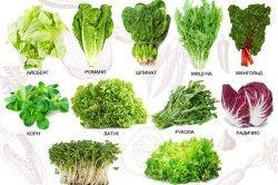Різні види салату.