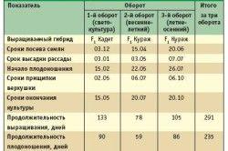 Таблиця строків вирощування огірків.