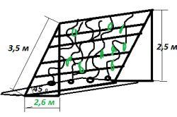 Схема вирощування огірків на сходах