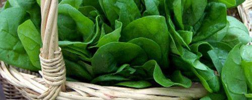 Фото - Як вирощувати шпинат