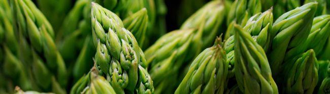 Фото - Як вирощувати спаржу