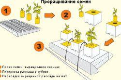Схема пророщування насіння