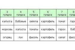 Схема розподілу грядок на ділянці