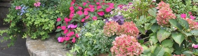 Фото - Як виростити квіти на дачі