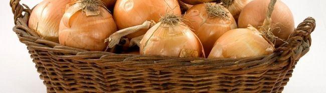 Фото - Як виростити хороший урожай цибулі?