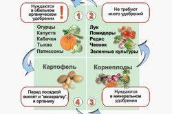 Схема сусідства овочів по типу добрив