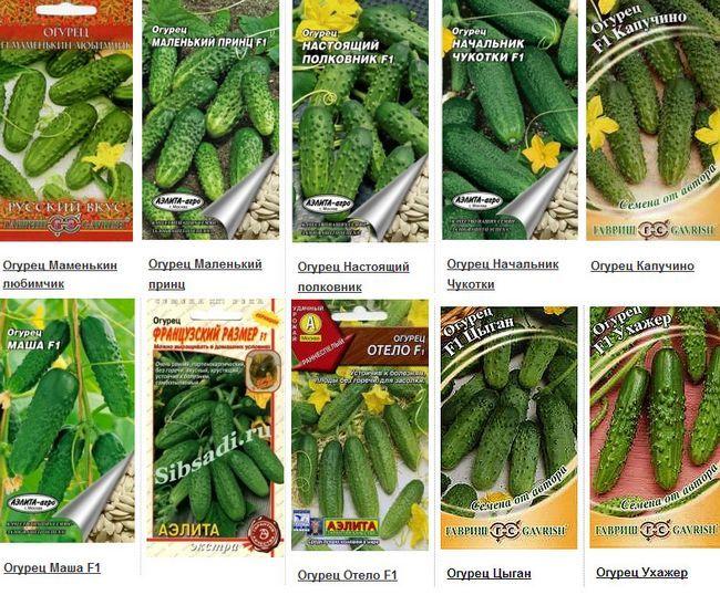 Фото - Як виростити огірки на грядці?