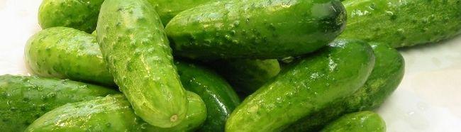 Фото - Як виростити огірки