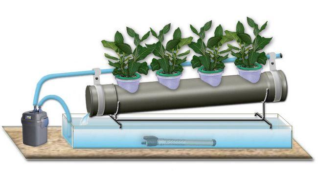 Фото - Як виростити свіжу зелень в за допомогою гідропонній установки на дому
