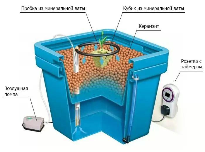 Вирощування томатів гідропоніка