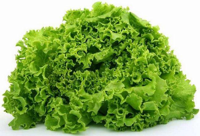 Фото - Як виростити зелень у теплиці?