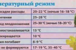 Температурний режим вирощування огірків.