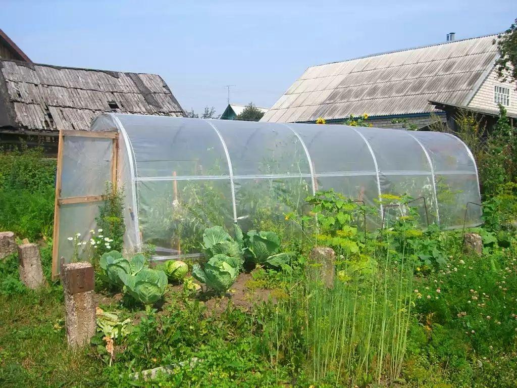 Фото - Як виростити хороший урожай при низьких температурах?