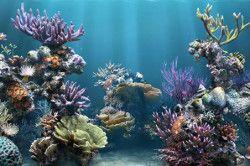 морські корали