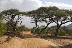 Танзанія - єдине родовище танзанита