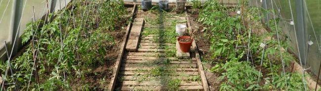 Фото - Яку систему поливу вибрати для садової теплиці?