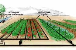 Схема пристрою системи крапельного поливу