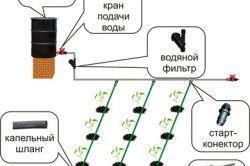 Монтаж системи крапельного поливу на ділянці