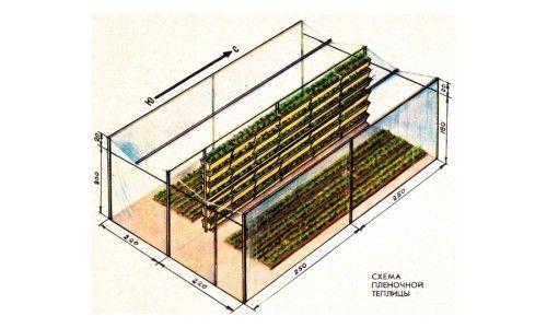 Схема плівковою теплиці (парника) для полуниці