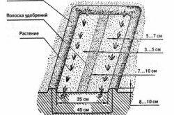 Схема пристрою грядок по Мітлайдера.