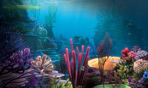 підводні корали