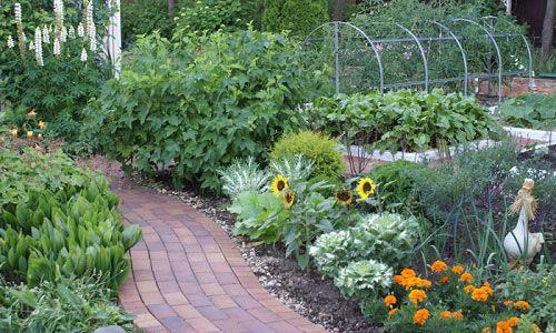 Фото - Красиві грядки - прикраса саду і запорука рясного врожаю