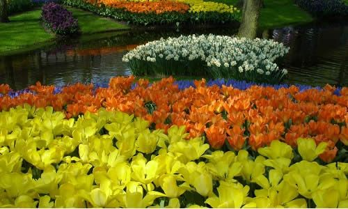 Фото - Красиві літні квіти в саду