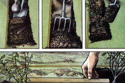 Ілюстрація посадки бирючини