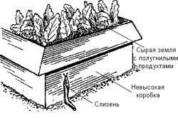 Схема пристрою пастки для слимаків