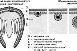 Схема освіти перлини