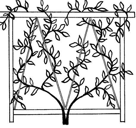 Фото - Опора для рослин як елемент ландшафтного дизайну