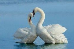Шпінель - символ любові і вірності