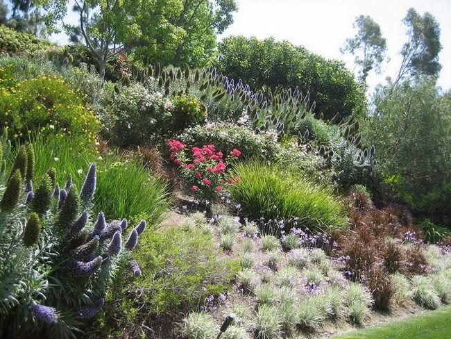 Фото - Основні моменти, які необхідно враховувати при виборі рослин для оформлення саду