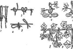 Схема підвязка рослин до шпалери