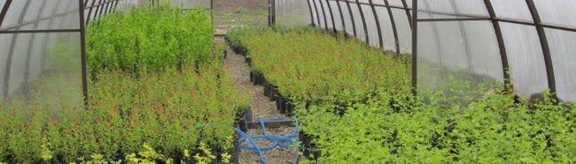 Фото - Особливості посадки рослин в теплиці