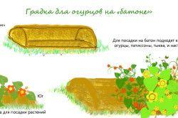 Схема посадки огірків на грядку-