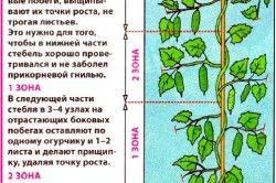 Формування огірків у теплиці.