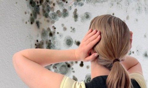Фото - Чому з'являється грибок у ванній і як з ним боротися?