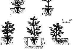 Схема посадки розсади в грунт