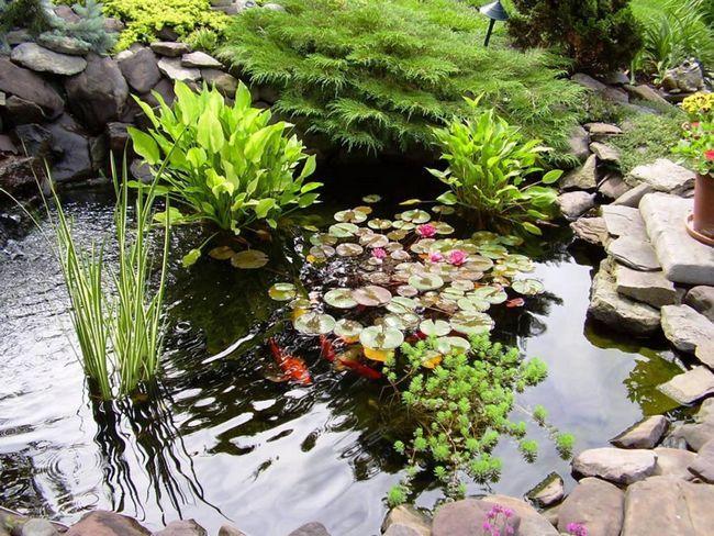 Фото - Рослини для дачного водойми