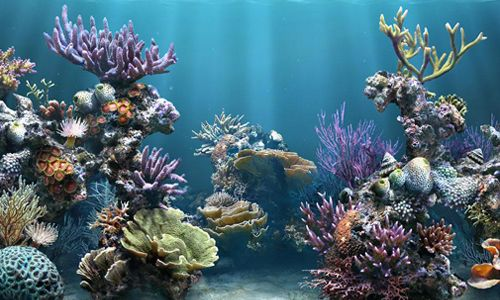 Фото - Різновиди натуральних коралів